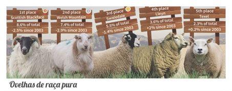 racas ovelhas puras