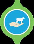 bovino ciclo animais4