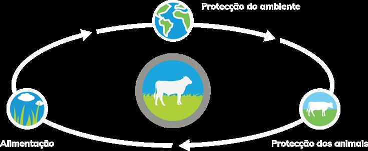 bovino ciclo img1